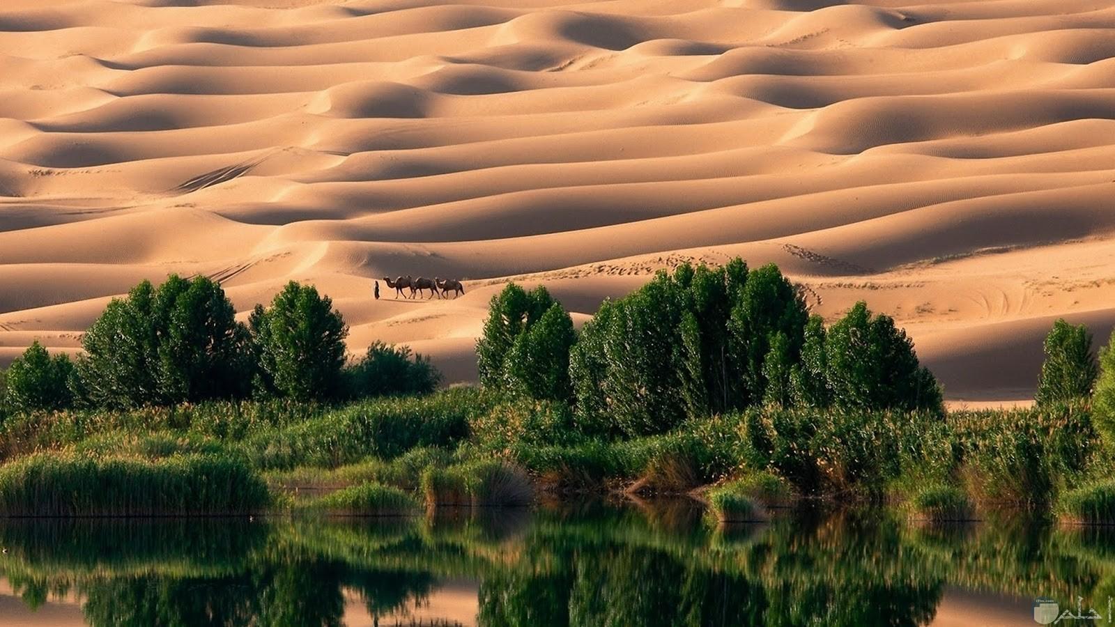 جمال الصحراء مع الطبيعة الخضراء و عيون الماء و الآبار العذبة.