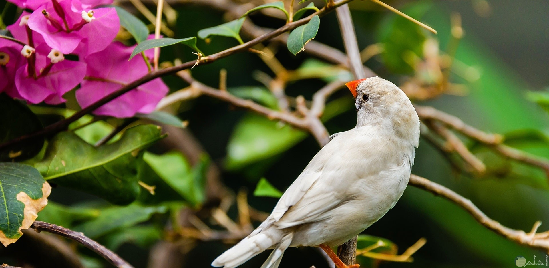 طائر جميل يقف على غصن شجرة