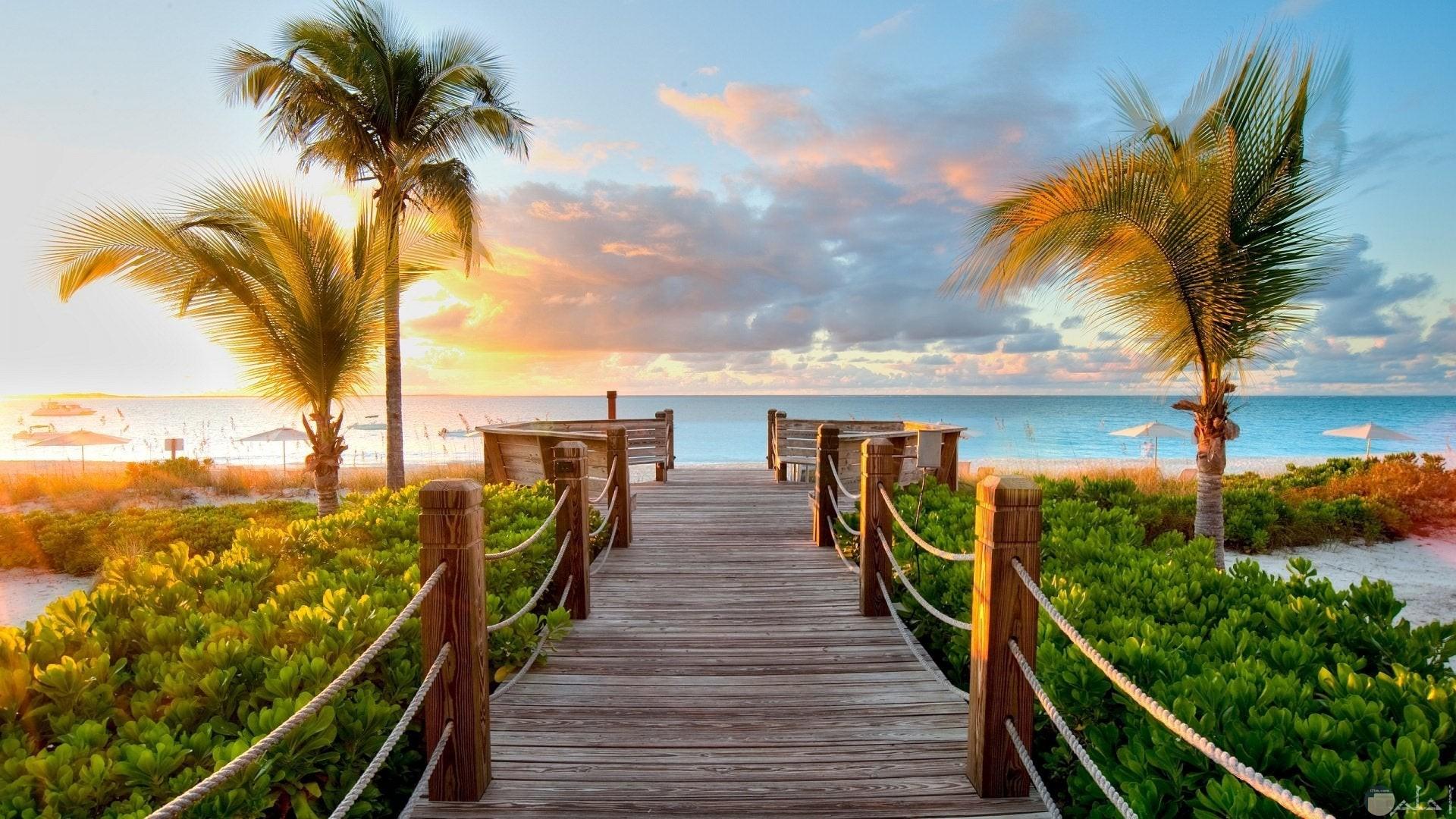 صورة رائعه بها جسر على البحر محاط بالشجر والنخيل