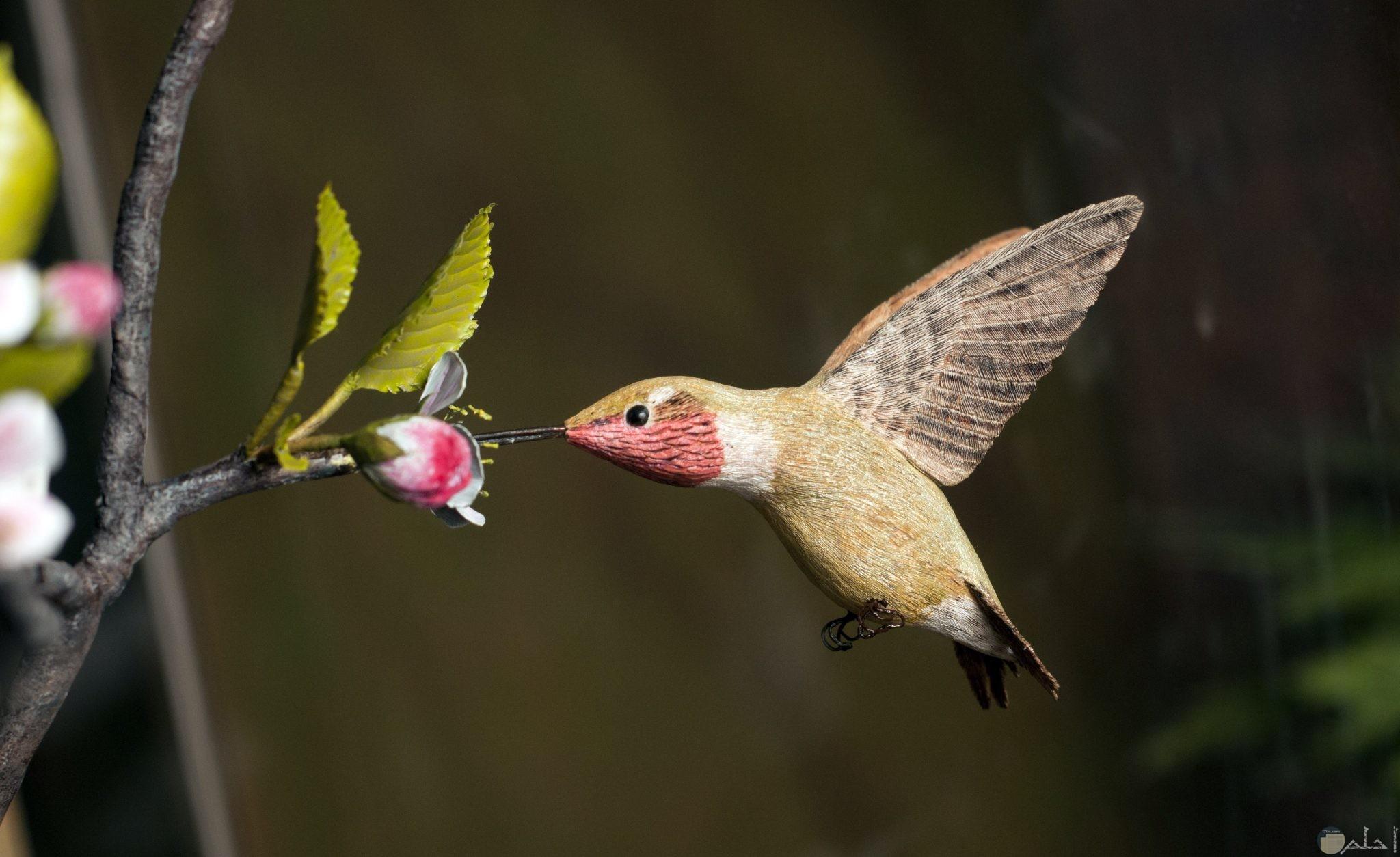 صورة عصفور ملون يأكل من زهرة صغيرة