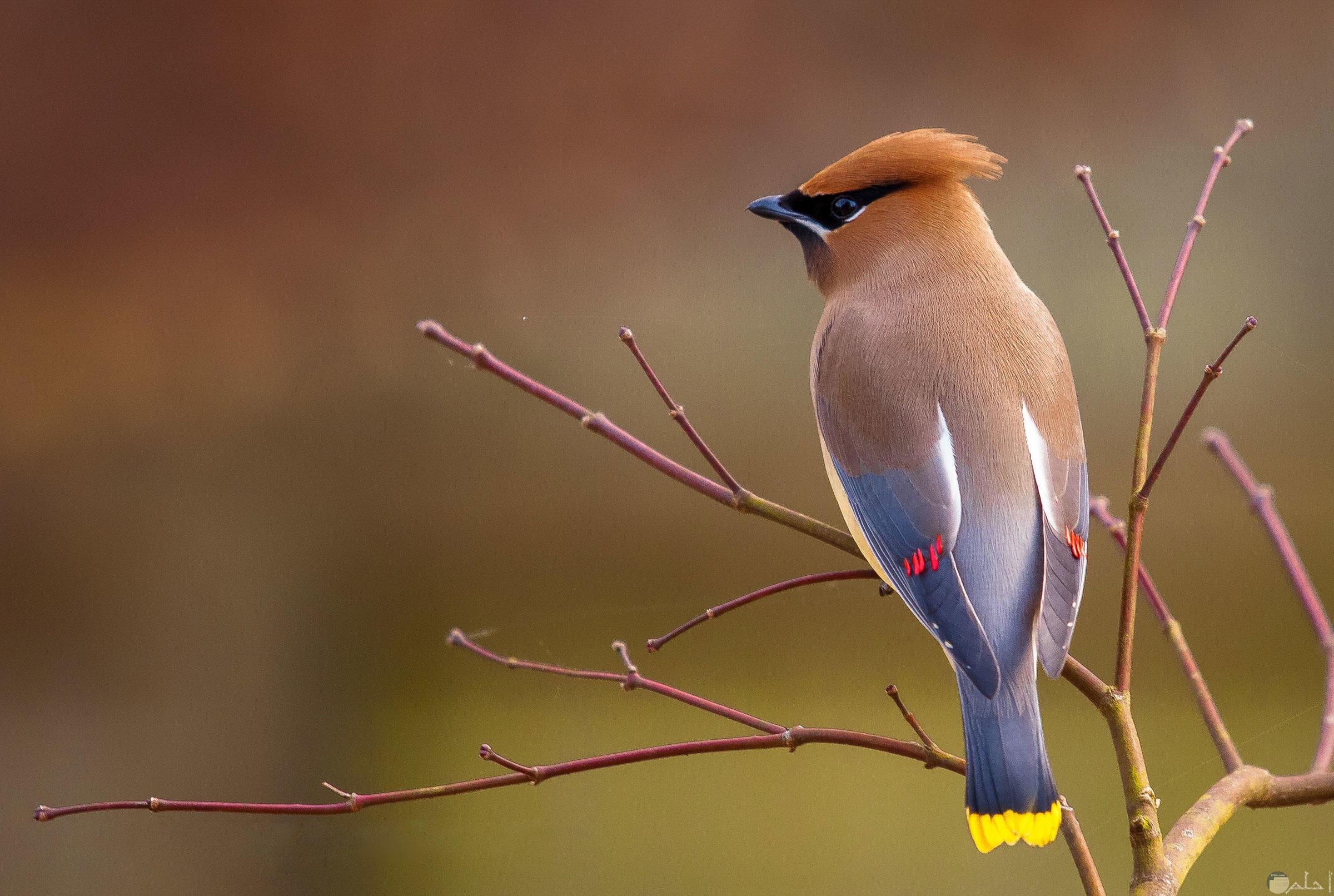 نوع من انواع الطيور النادرة واقف على شجرة