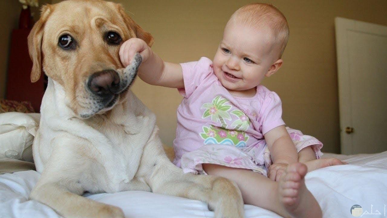 بنت صغيرة تلعب مع الكلب.