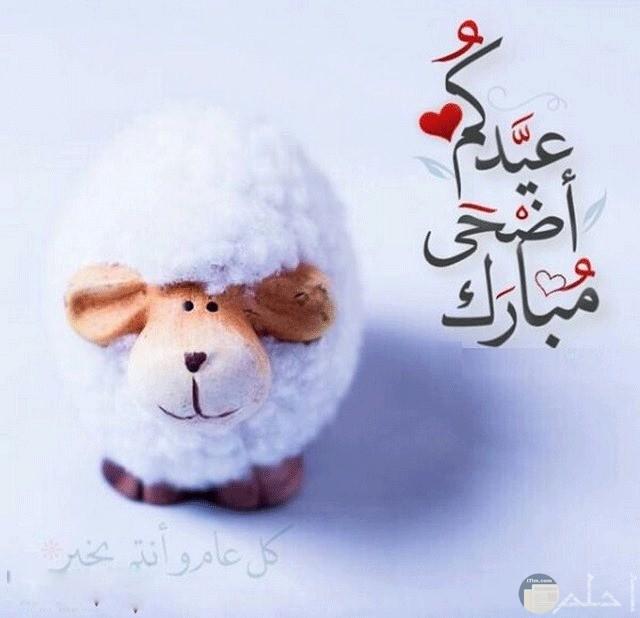 خلفيات عيد الأضحى خروف العيد