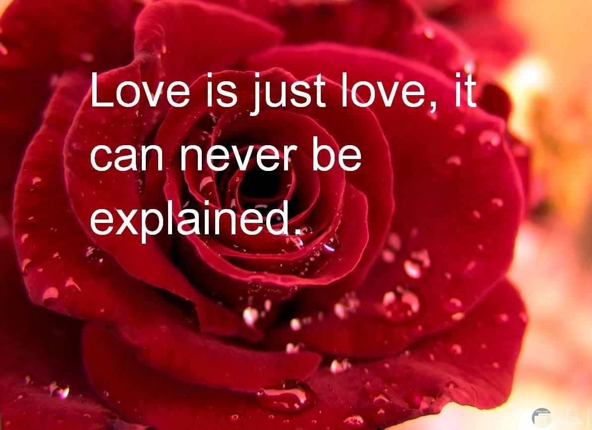 خلفية وردة حمراء وعبارات حب