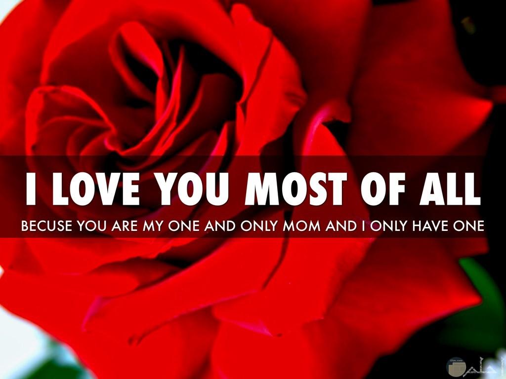 وردة حمراء مكتوب عليها كلام حب
