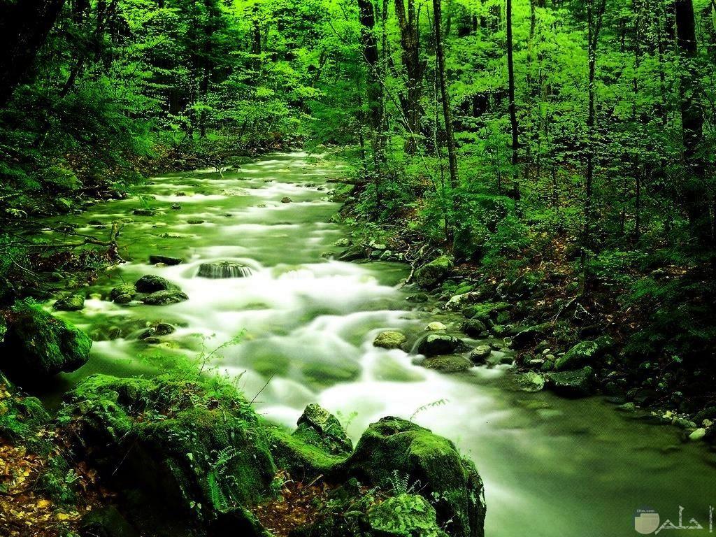 أشجار جميلة تحيط بجدول ماء رائع