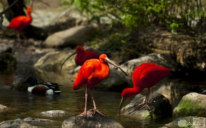 طيور بألوان رائعة زاهية
