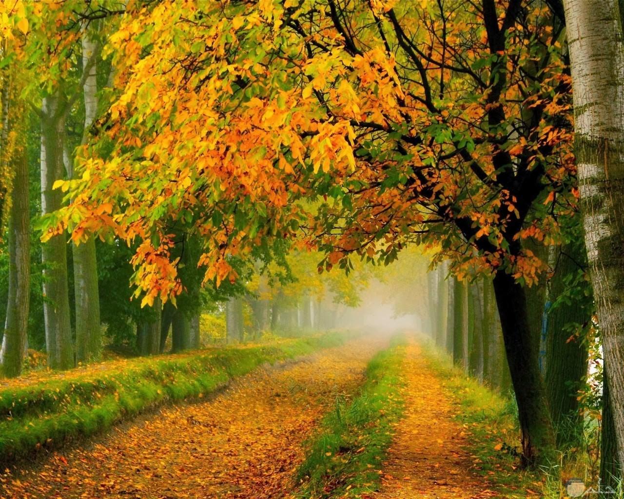 طرق بدائية وسط الغابات جميلة الشكل.