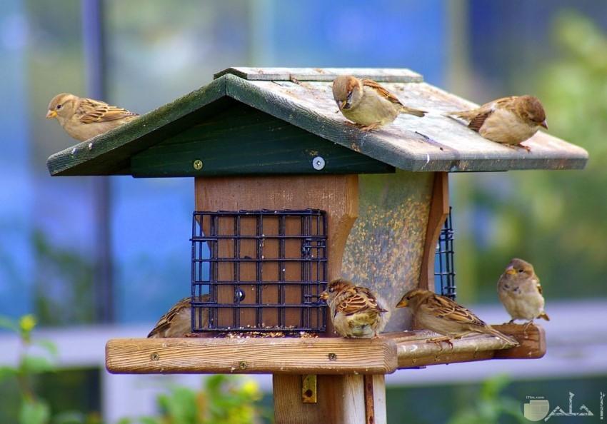 طيور رائعة تقف على منزلها