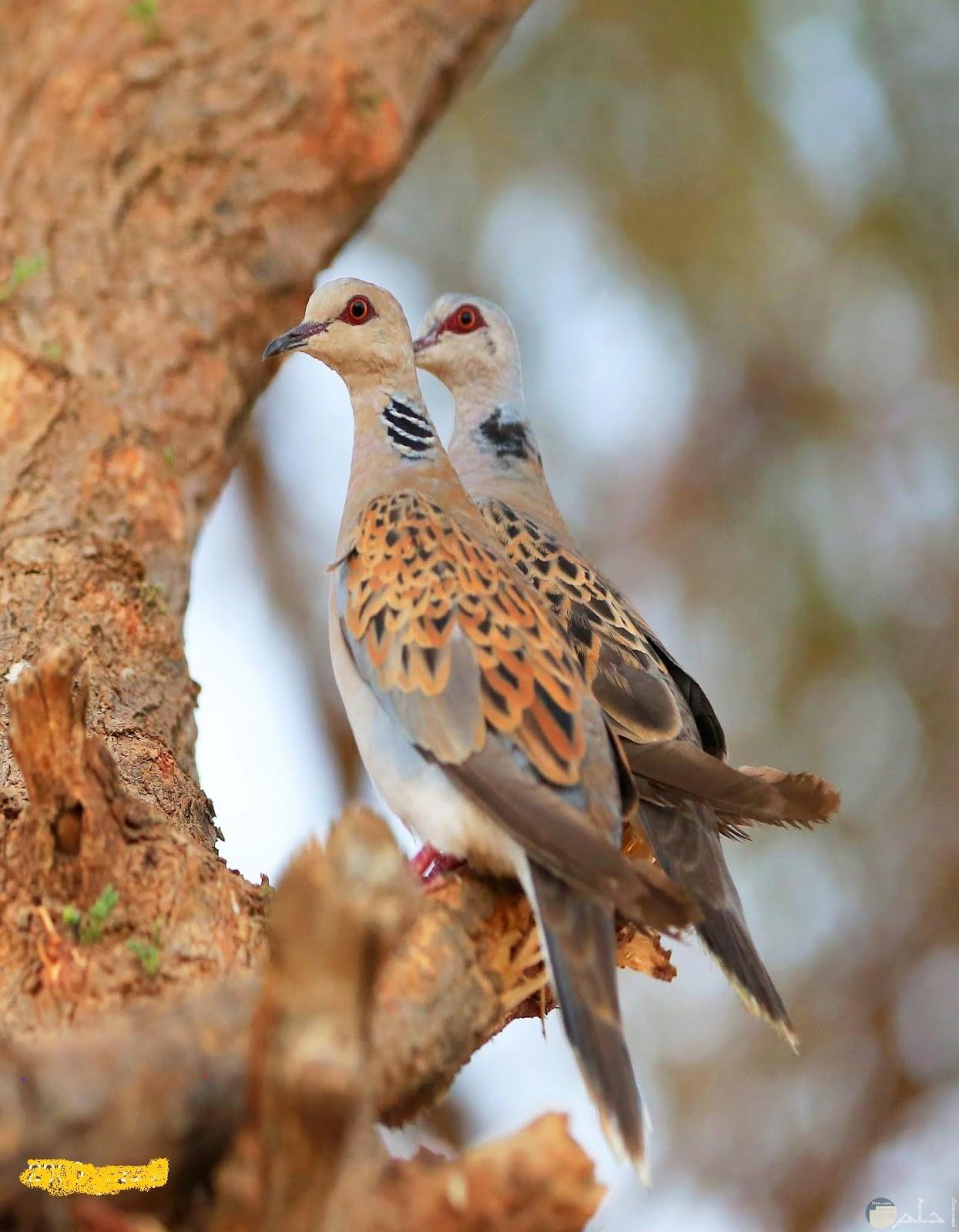 زوج من طيور القماري على غصن شجرة.