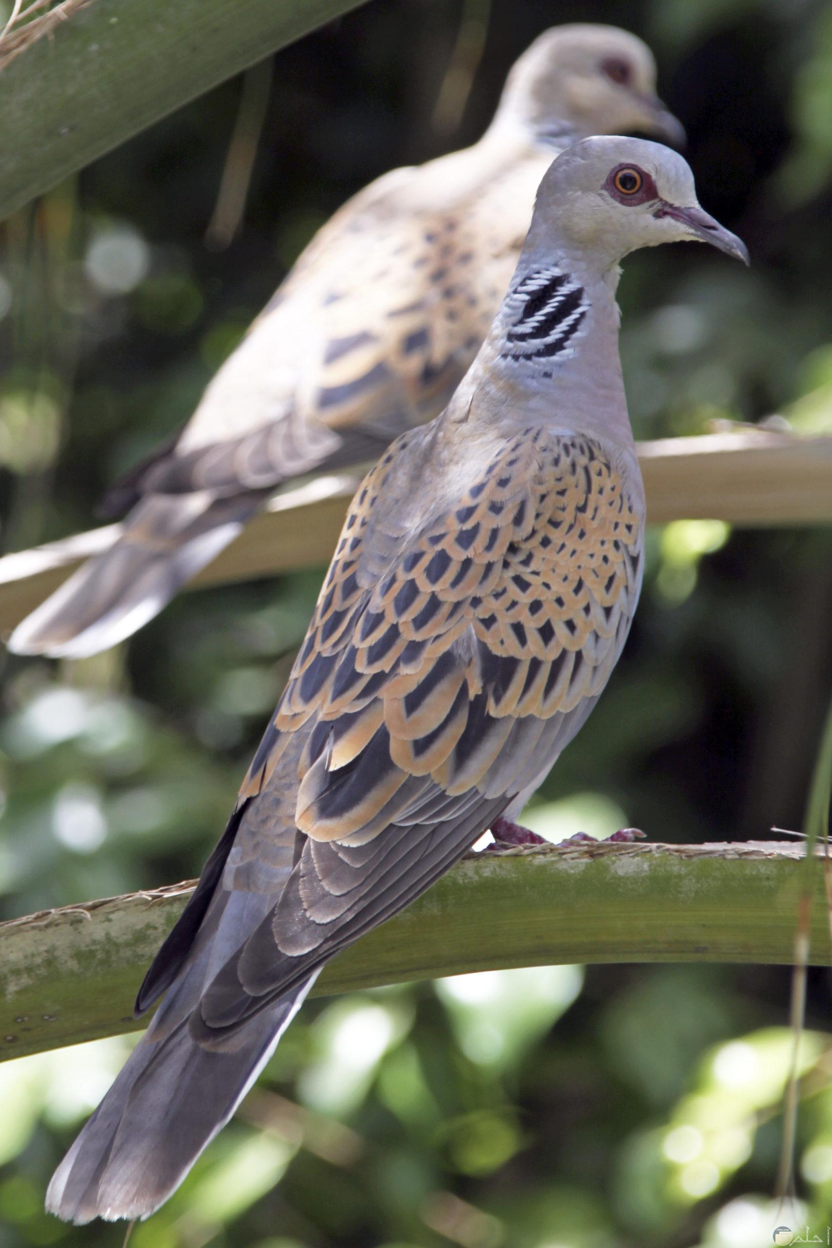 صورة كيوت لطيور القماري.