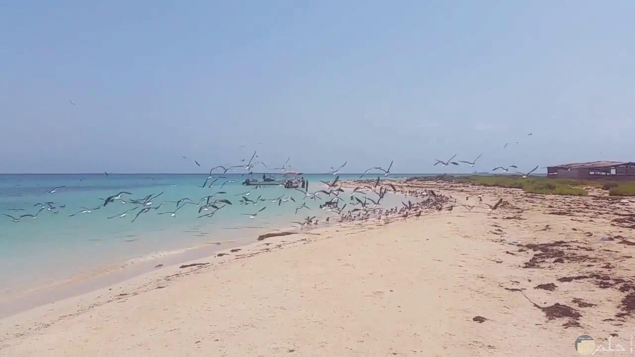 شاطئ جزيرة أحبار جازان