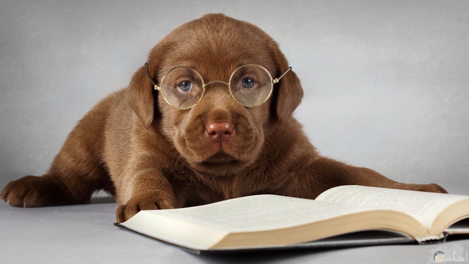 كلب مرهق من القراءة.