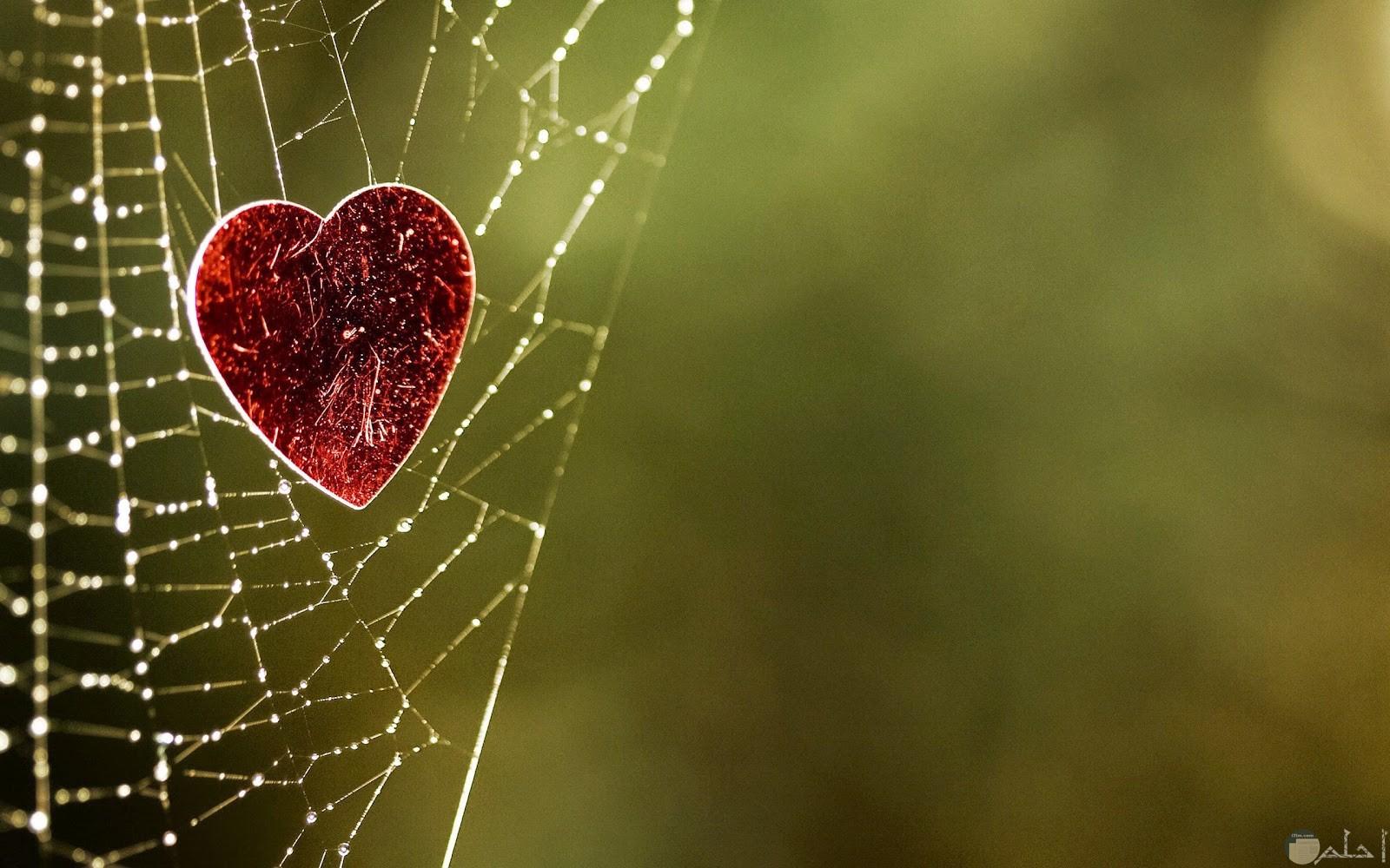 عندما تقع في شباك الحب لا شئ يخرجك.