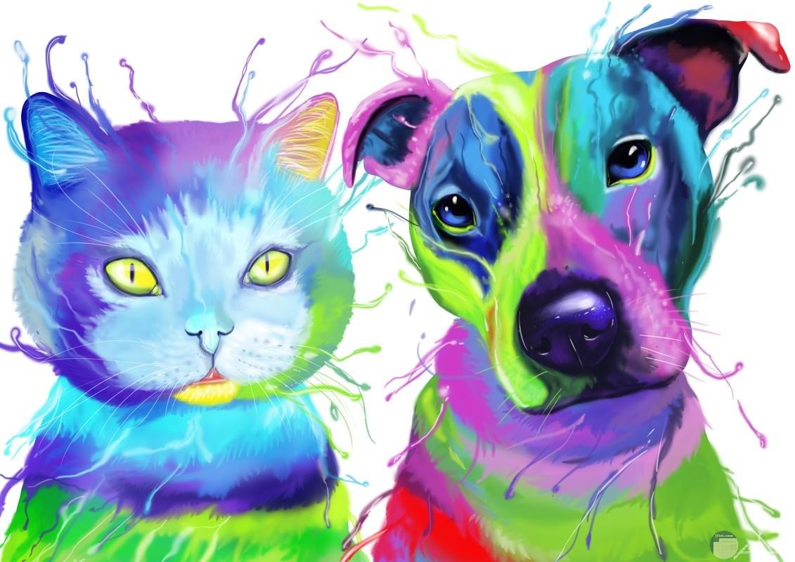 رسمة ملونة لكلب و قطة.
