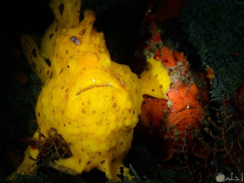 لقطة كوميدية مضحكة لسمكة في الاعماق تبعد الاخرى بزعانفها.