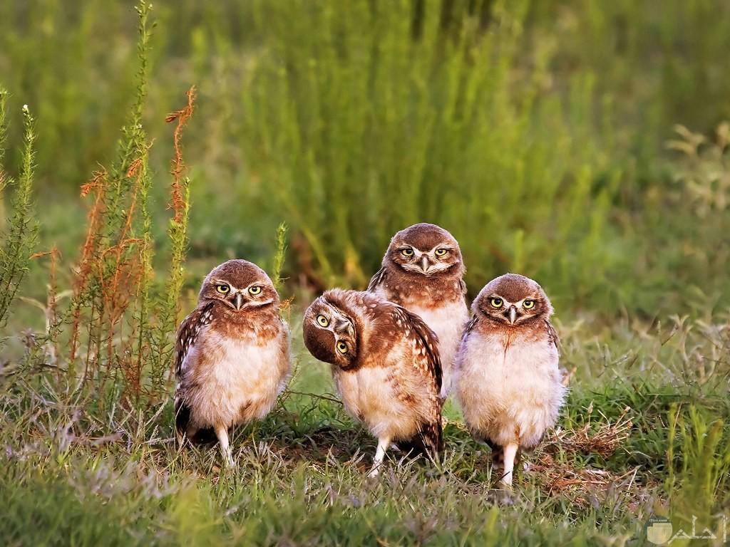 لقطة نادرة لطيور في البرية بوضع يستحق جائزة أحسن صورة.