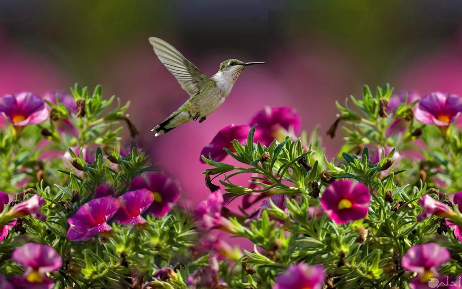 طائر يحلق فوق الزهور.