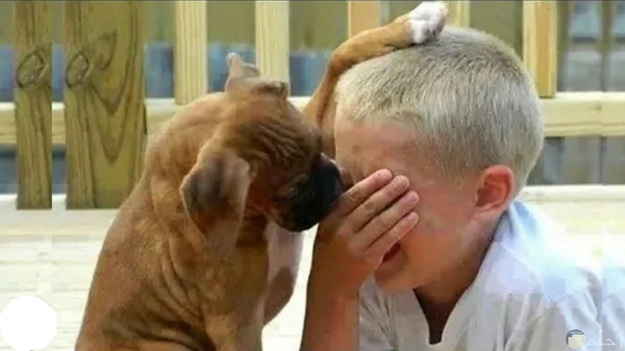 لقطة جميلة لطفل يبكي و كلبه يضع أحد أرجله فوق رأسه ليواسيه في حزنه.