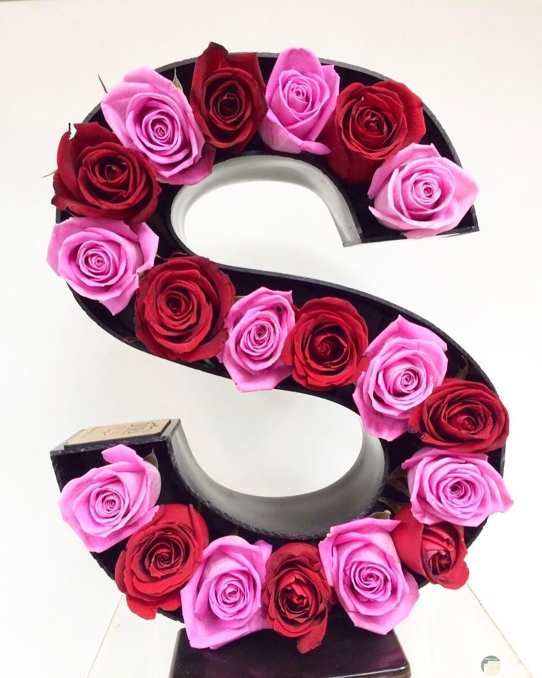 حرف s مع الورد.