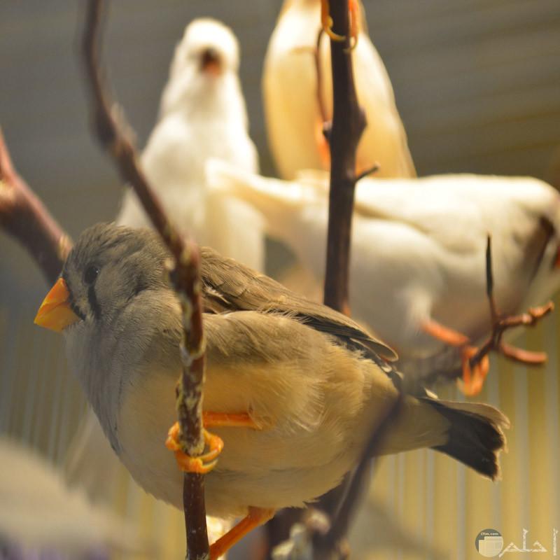 لقطة لطيور زيبرا جميلة
