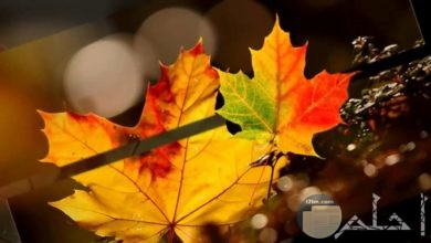 الخريف و جمال الأوراق.