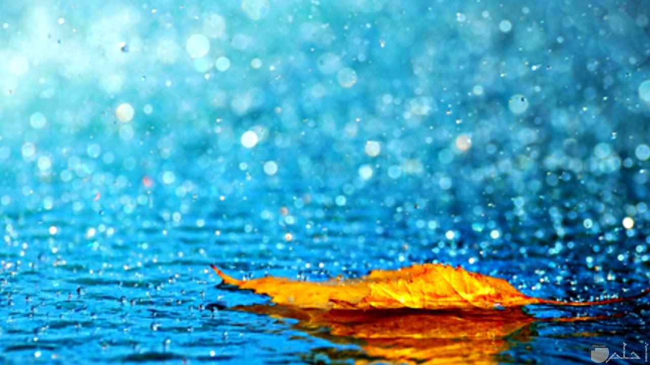 ورقة شجر تطفو فوق ماء المطر.