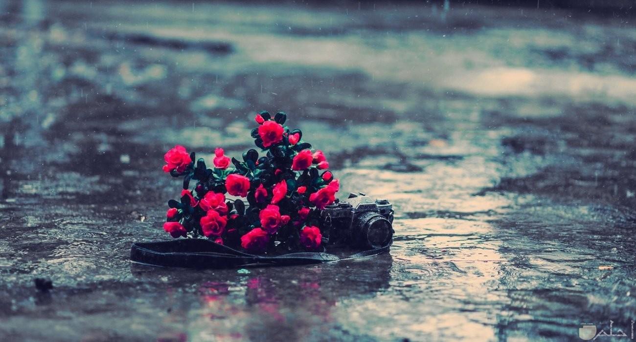 بوكيه ورد أحمر مع كاميرا وسط الأمطار.