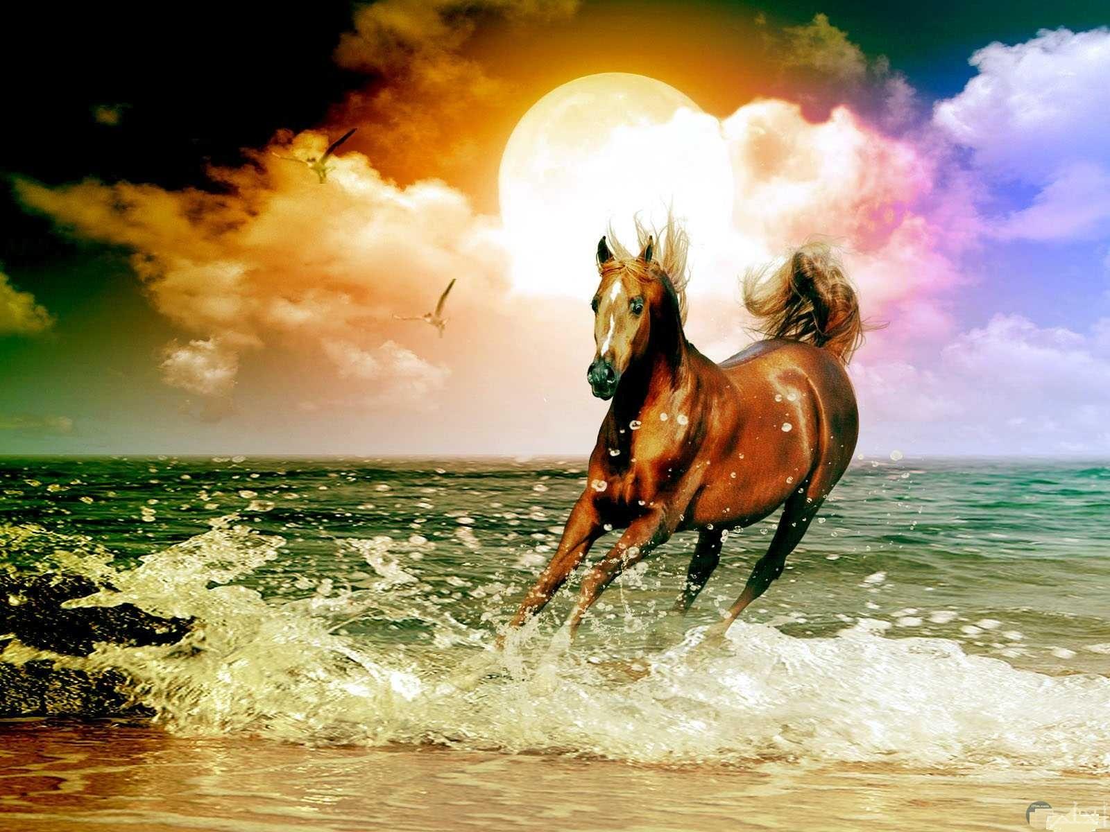 حصان يجري على رمال الشاطئ و تداعبه أمواج البحر.