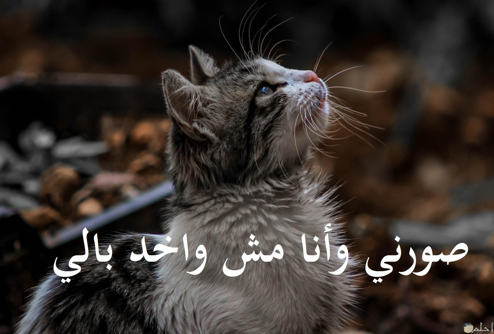 لما تطلب تتصور و أنت مش واخد بالك...