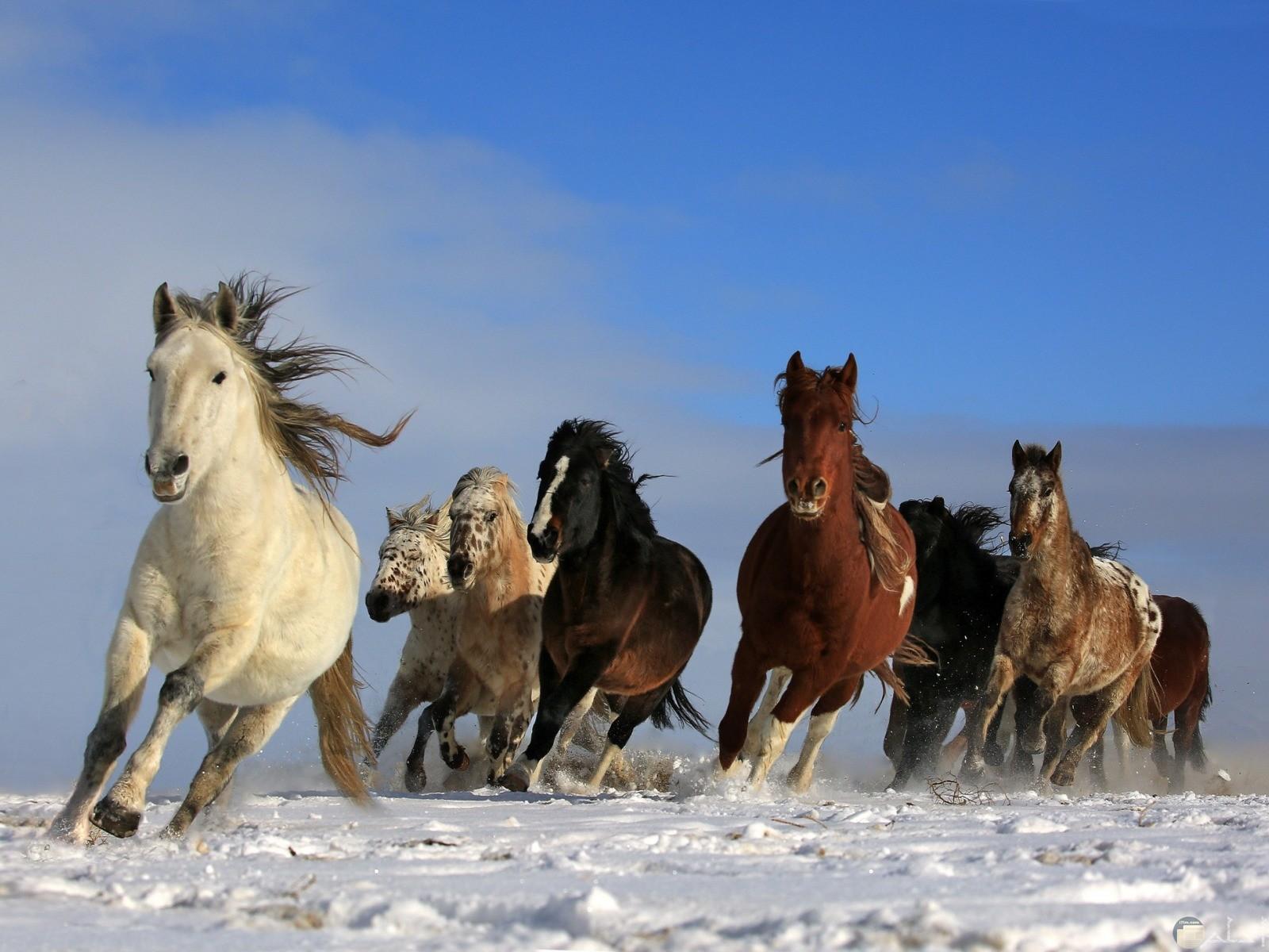 مجموعة خيول جميلة تجري على الشاطئ.