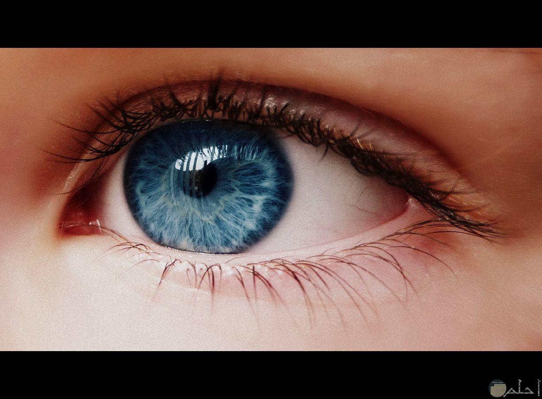 عيون زرقاء مثل البحر.