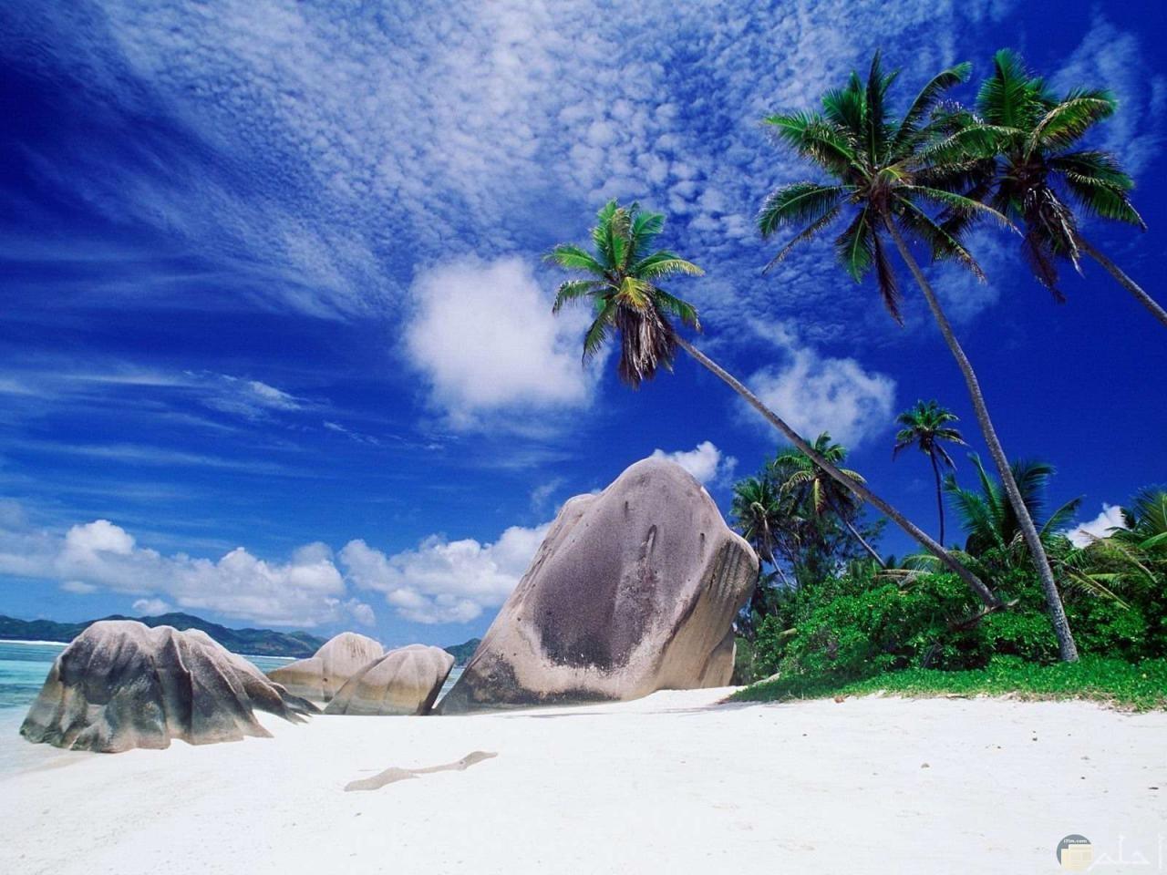 نخيل و أشجار الشواطئ.