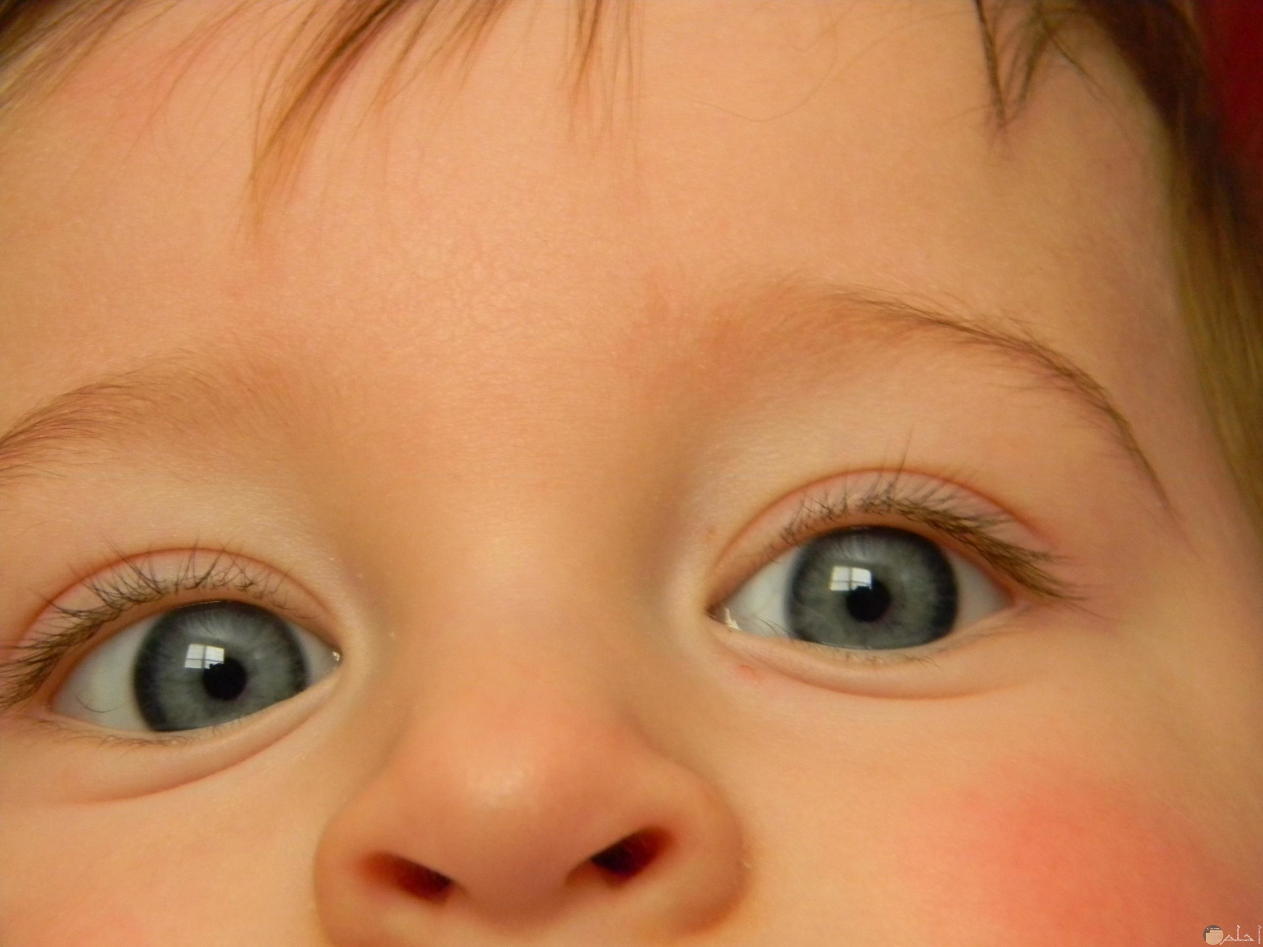 عيون الأطفال البريئة.