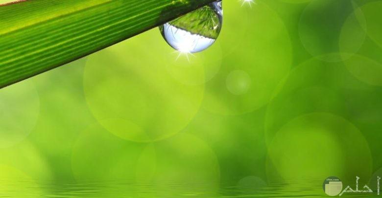 فراشة تشرب ما قطرة ماء على ورقة شجر.
