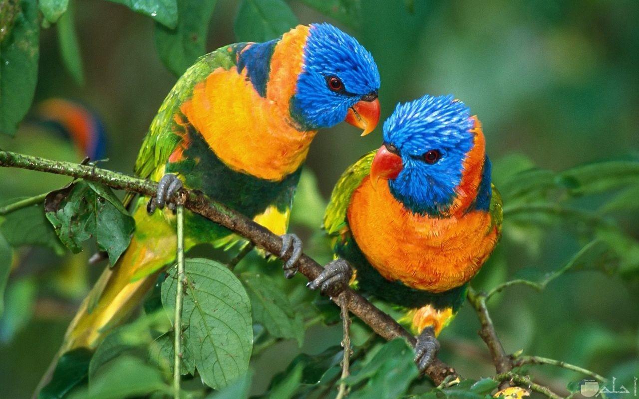 طيور الكناريا الجميلة تقف بين الأغصان.