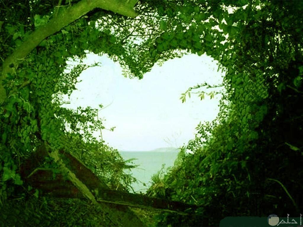 أغصان شجر تتشكل على شكل قلب.