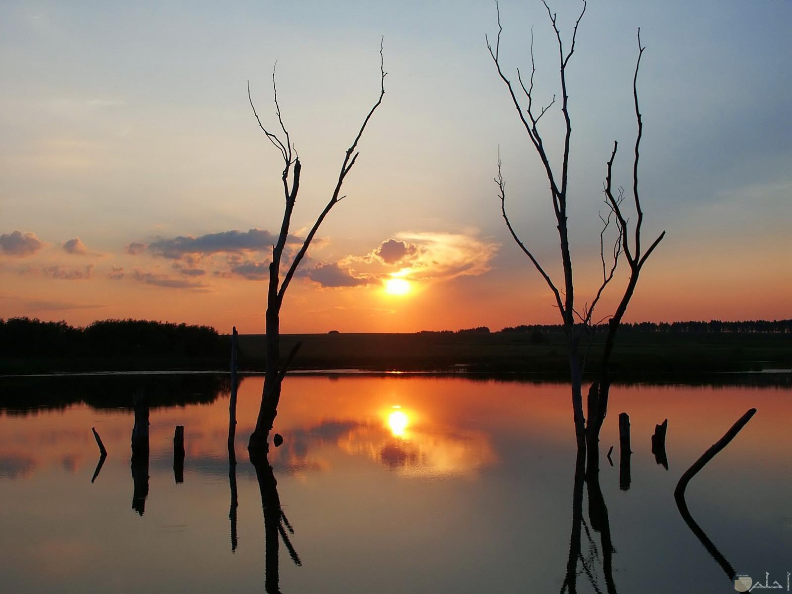 الشمس و مرآة المياه للشجر.