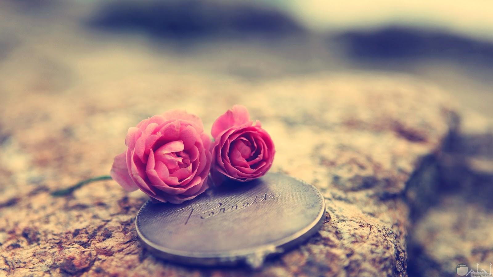 وردة الحب الدافئ.