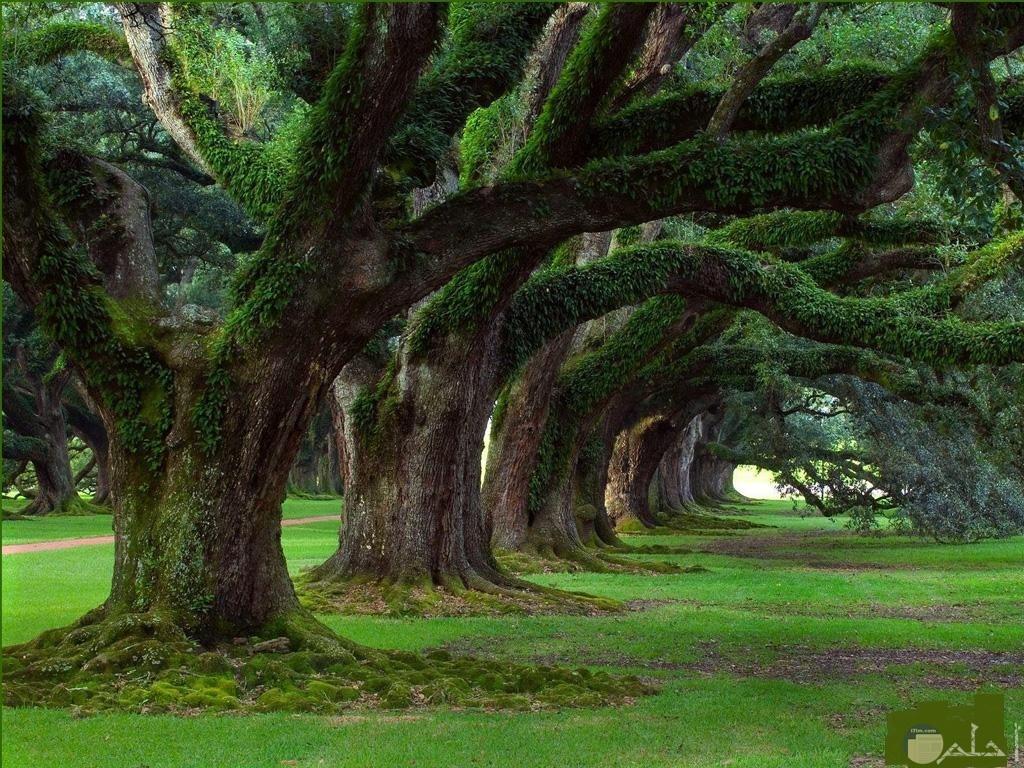 الاشجار و التفافها الخلاب.