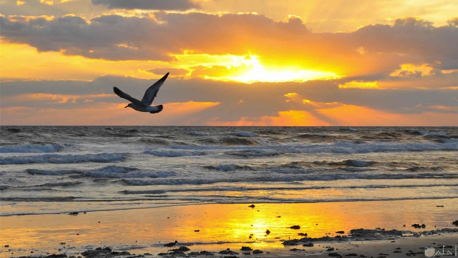 فرحة الطير بشروق الشمس.