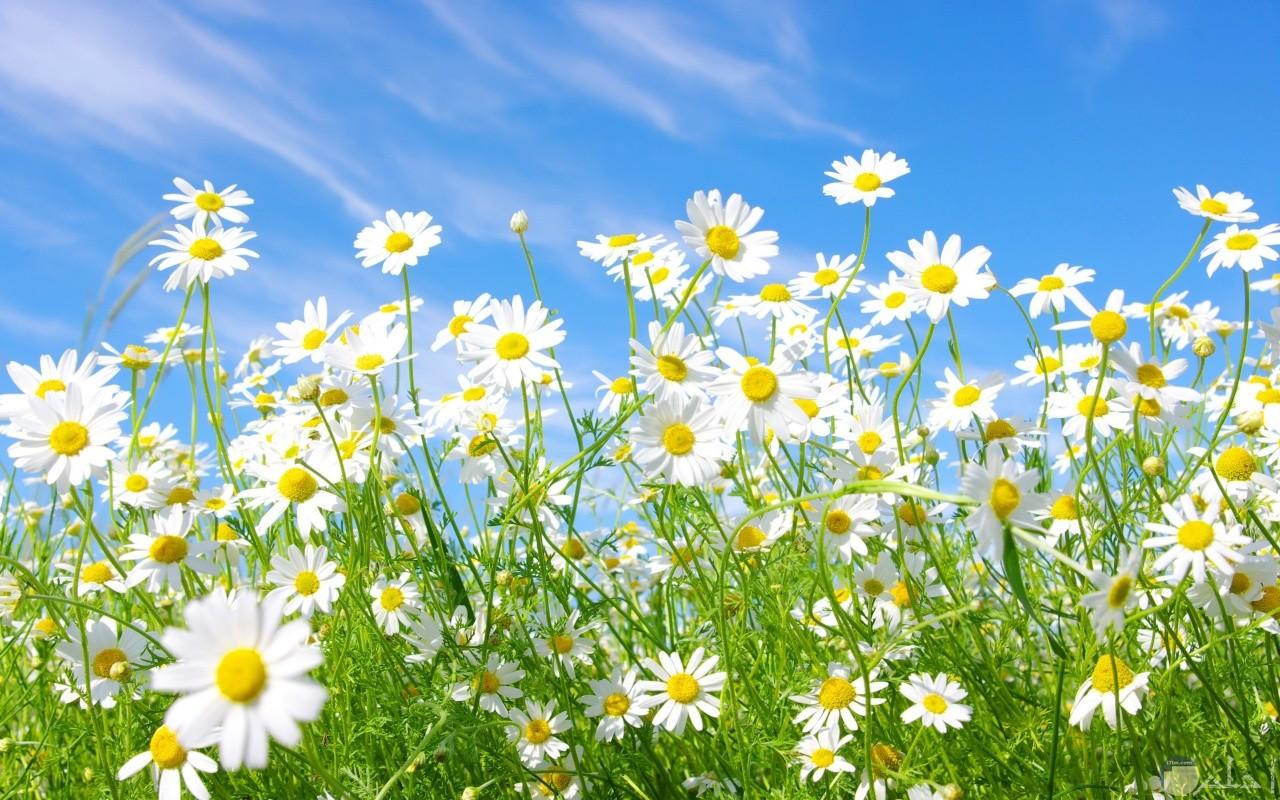 تتفتح الزهور بفصل الربيع على مر العصور.
