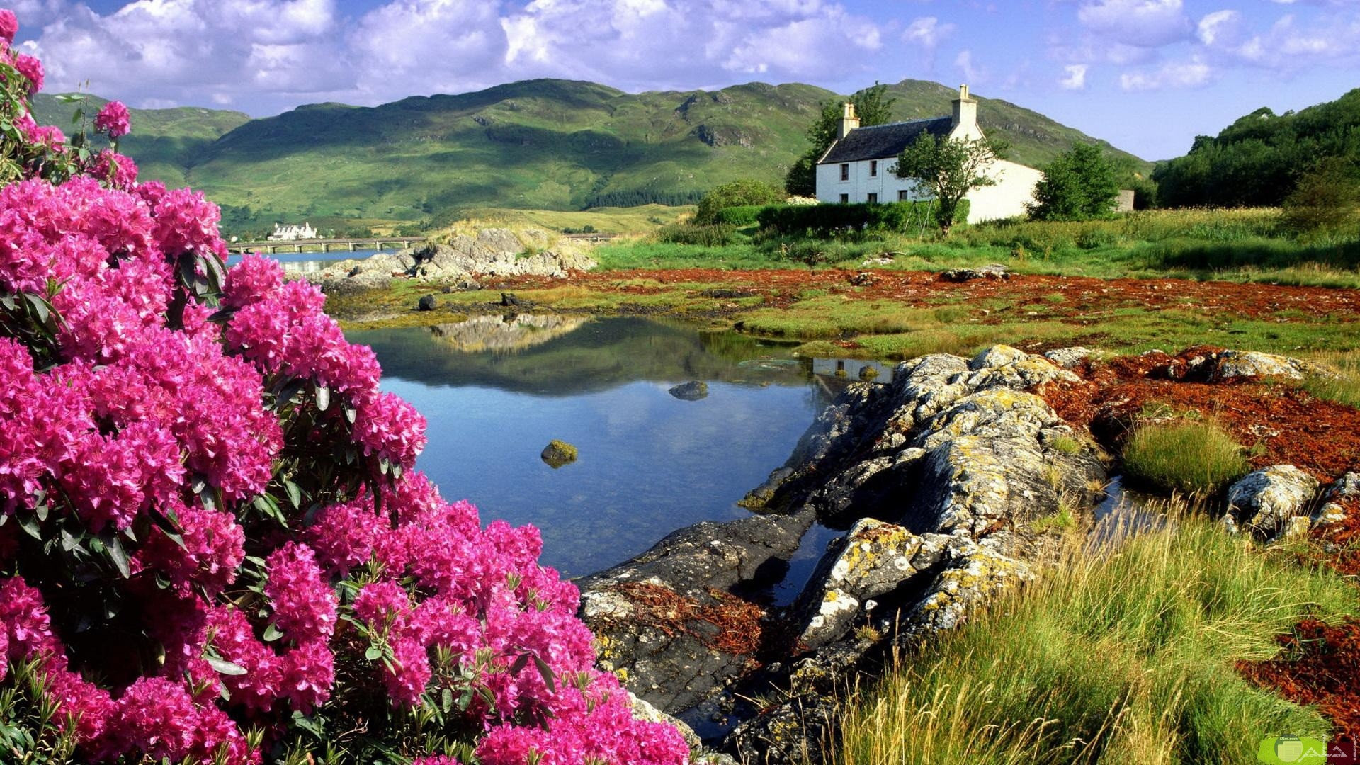 البحر و الزهور و الجمال.