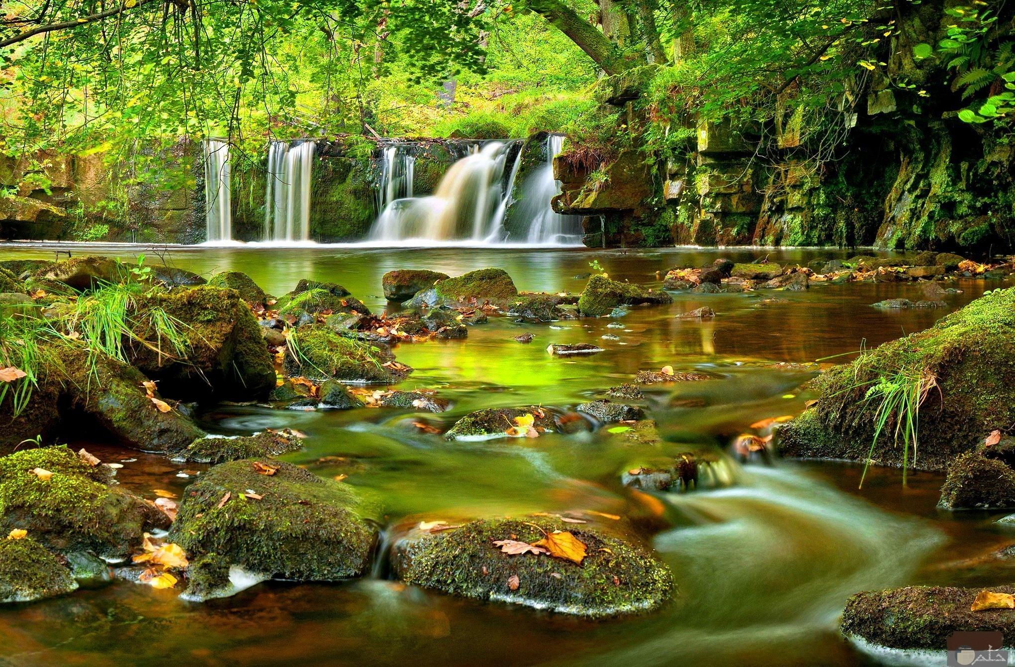 الماء و الخضرة لهم جمال خاص.