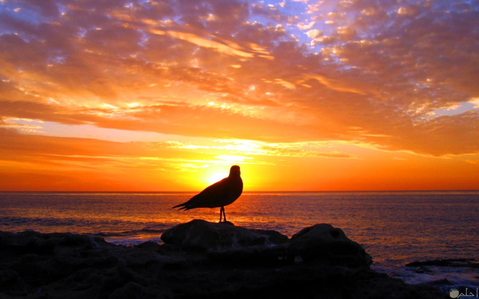 الطير و الماء و غروب الشمس.