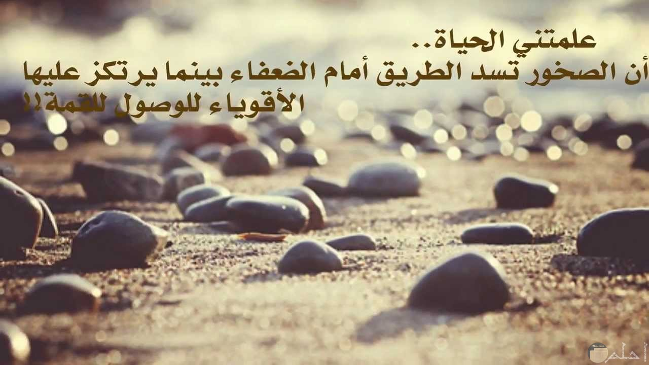 الصخر يقوى الحياة.