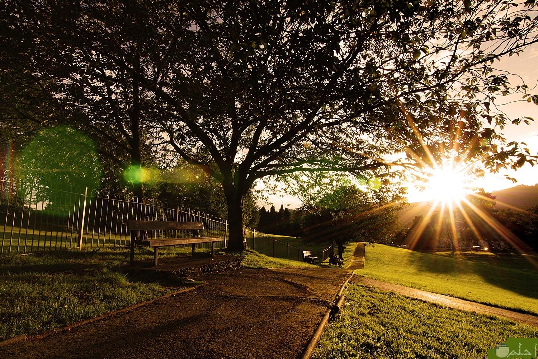 بزوغ الشمس من بين الشجر.