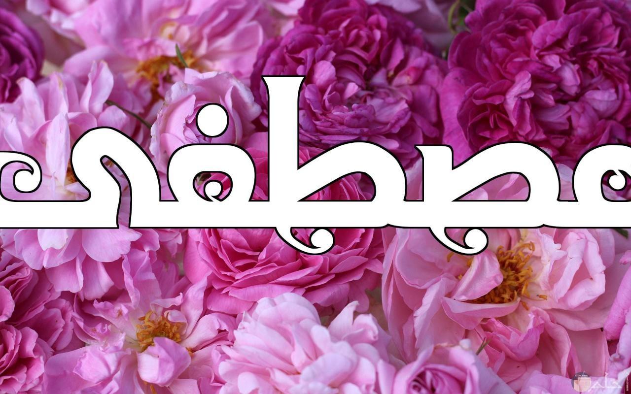 مصطفى بنقاء الورد.