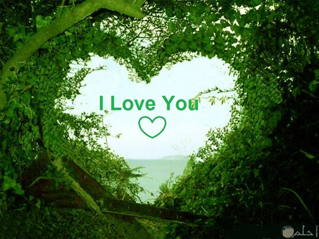 قلب من أغصان الشجر مكتوب فيه بحبك بالانجليزية.