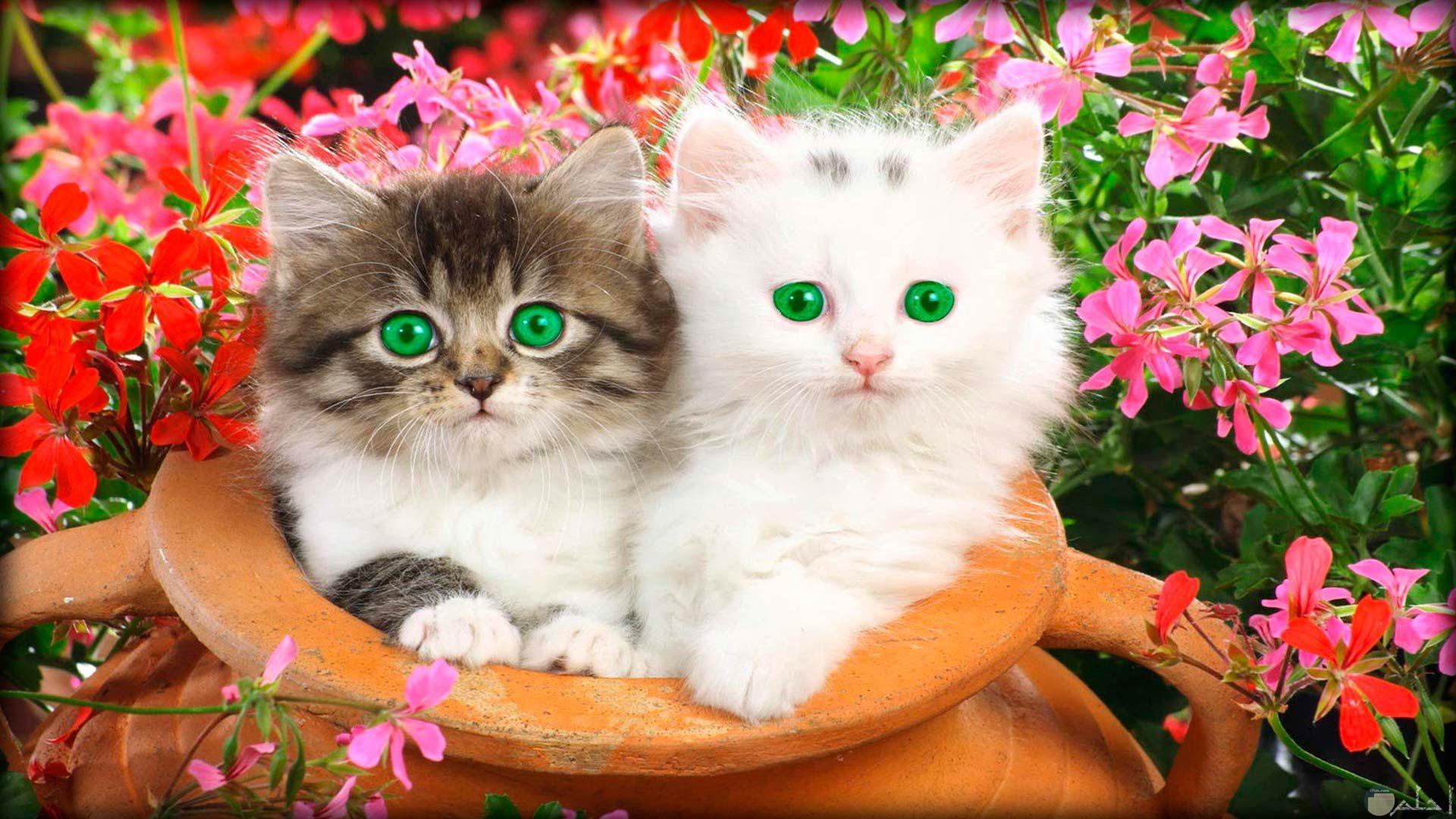 القطط و حلو جمالها.